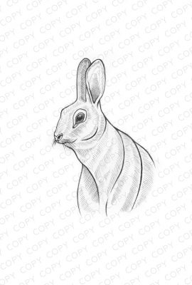 Bunny Sketch Drawing