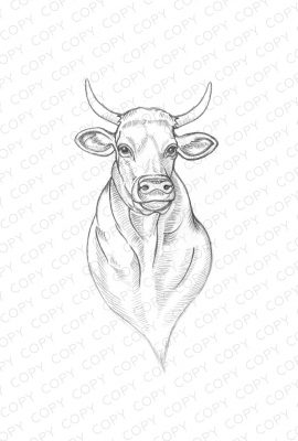 Cow Sketch Drawing