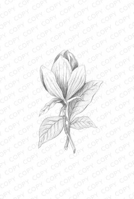 Flower Sketch Drawing