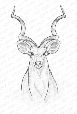 Kudu Sketch Drawing