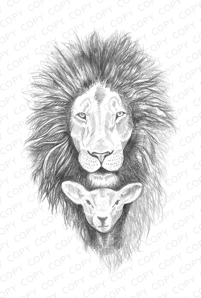 Lion And Lamb Sketch Drawing