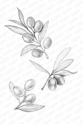 Olive Branches Sketch Drawing