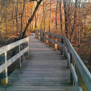 Wood-bridge-and-autumn-trees
